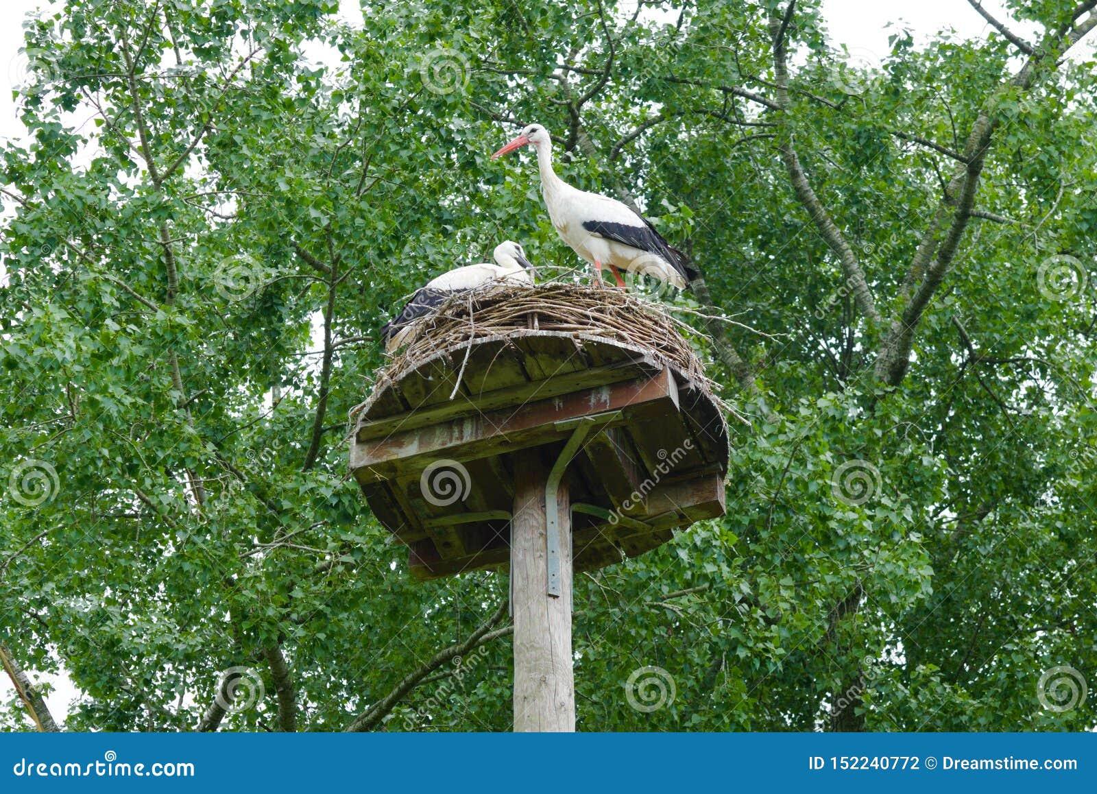 在阿姆斯特丹vondelpark的鹳巢