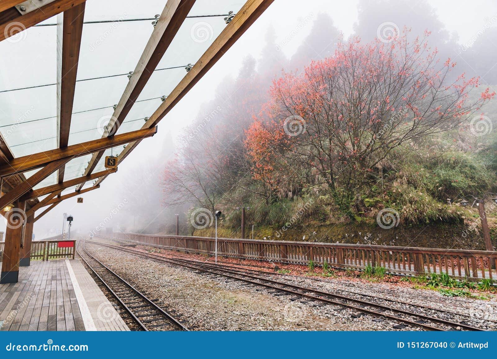 在阿里山森林铁路中止的空的火车路轨在昭平火车站平台与树的和雾在背景中