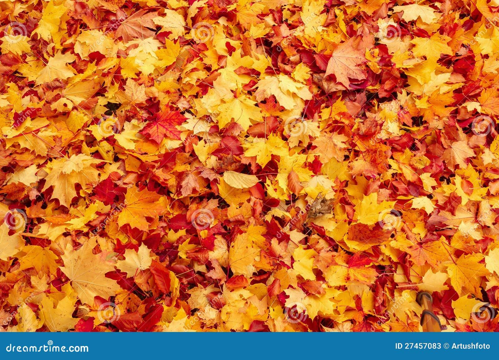 在陆运的秋天橙色和红色秋叶
