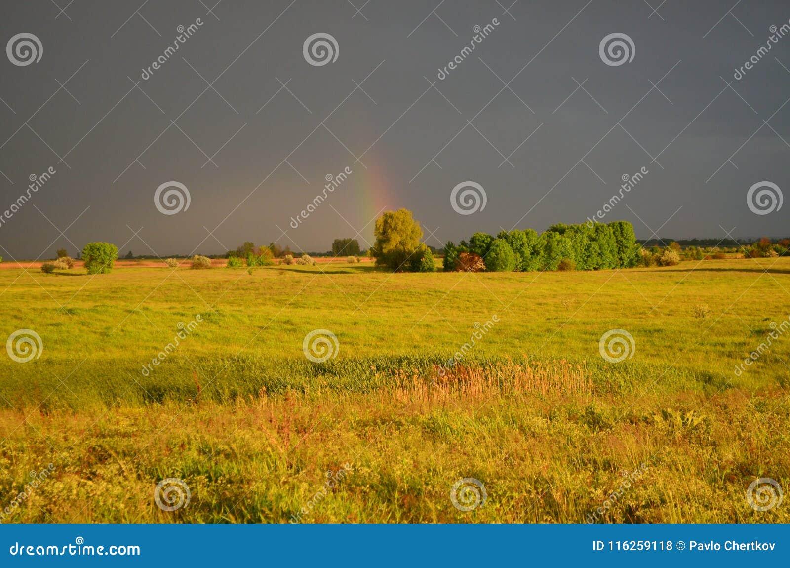 在雨以后的维尔京草甸