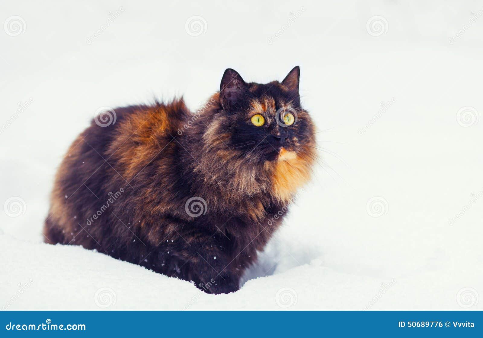 Download 在雪的猫 库存照片. 图片 包括有 空白, 季节性, 季节, 不可靠, 背包, 雪花, 室外, 冷静, 小猫 - 50689776