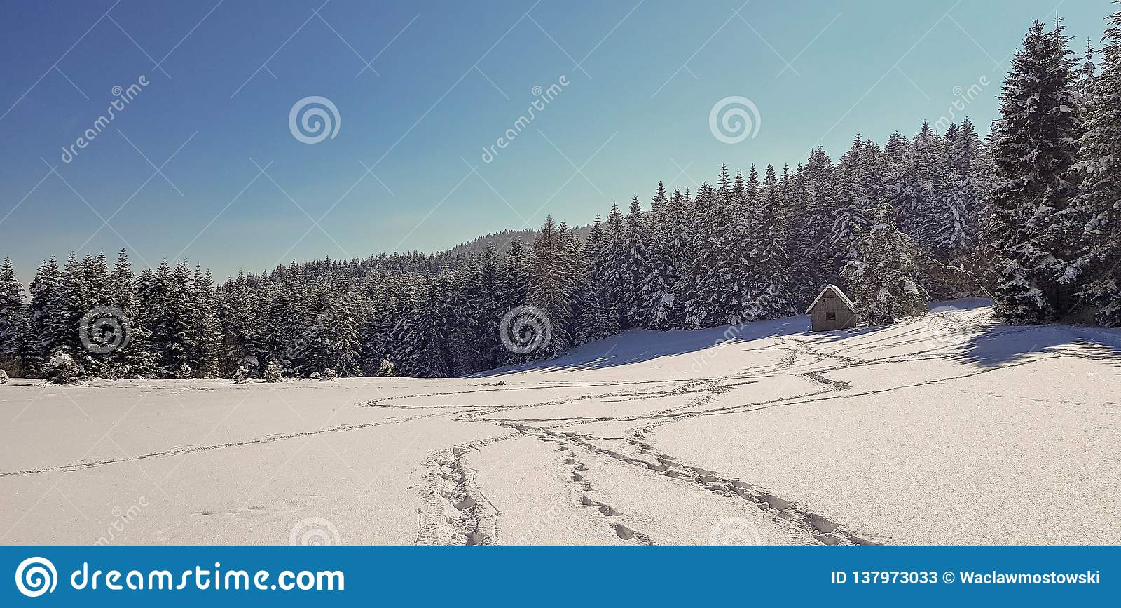 在雪的脚步