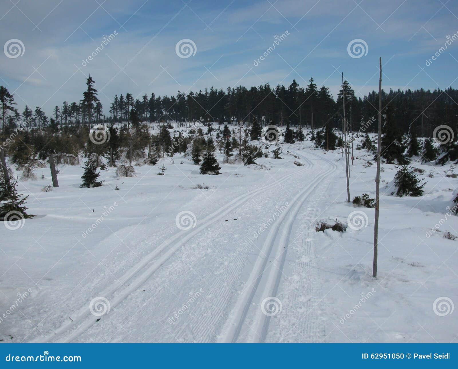 在雪的轨道在冬天森林里