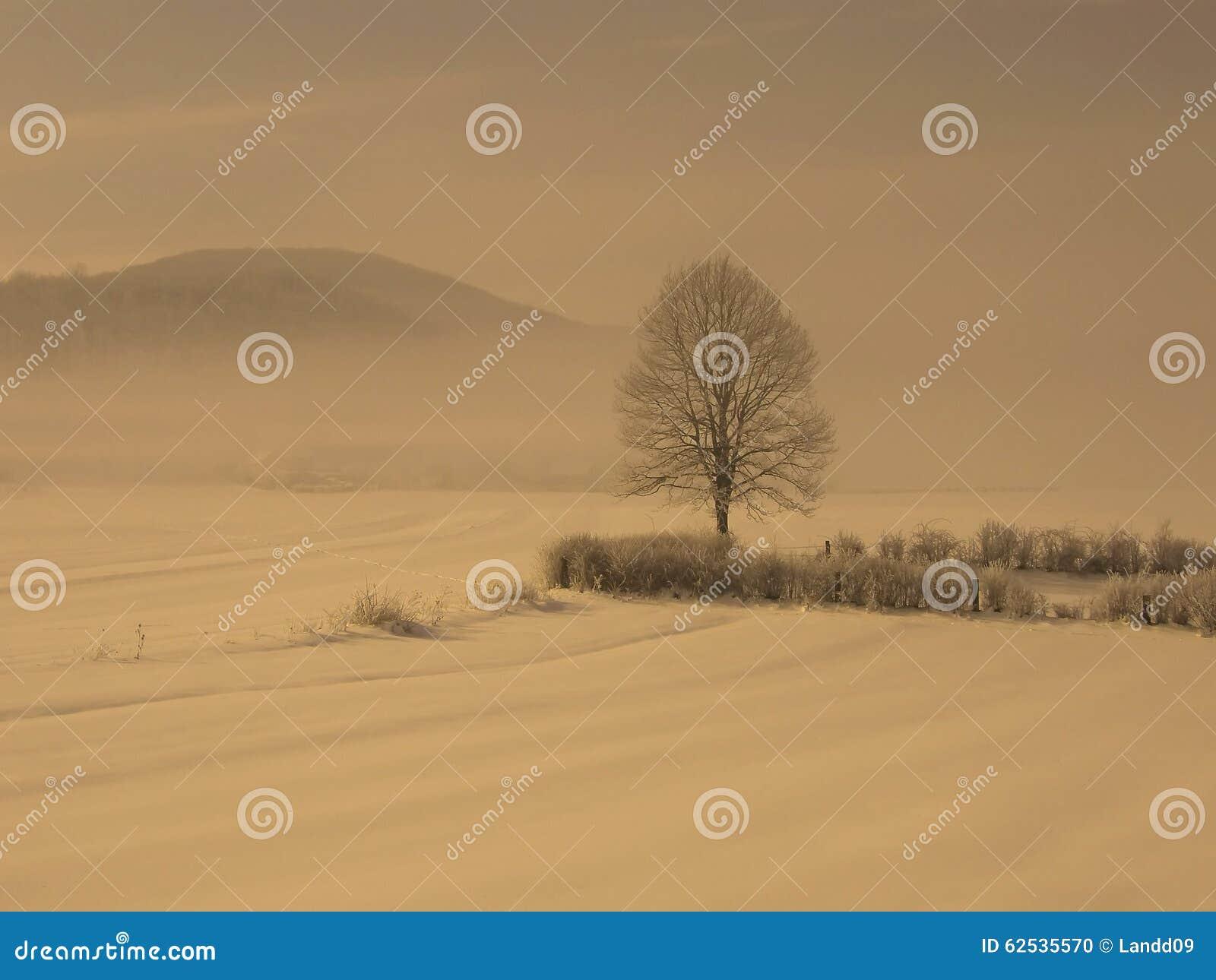 在雪雾的偏僻的树