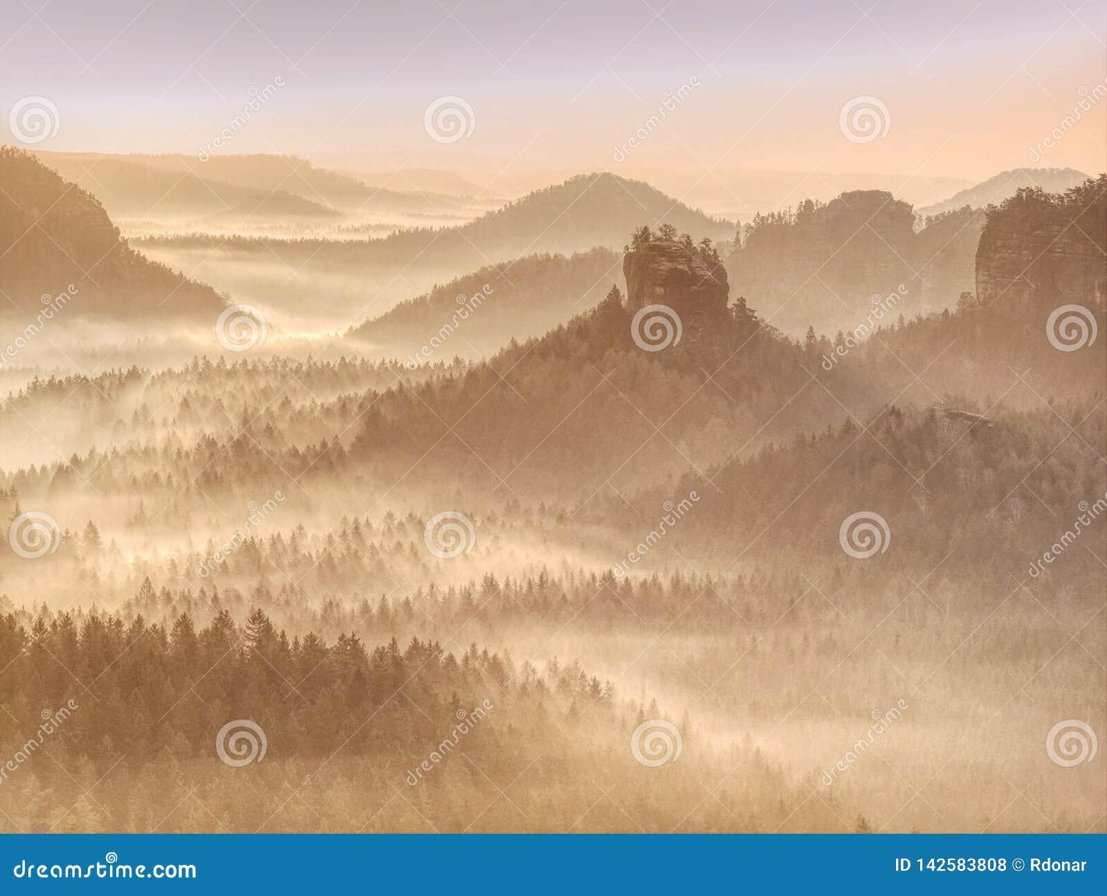 在雾和太阳的树在一个早期的秋天早晨