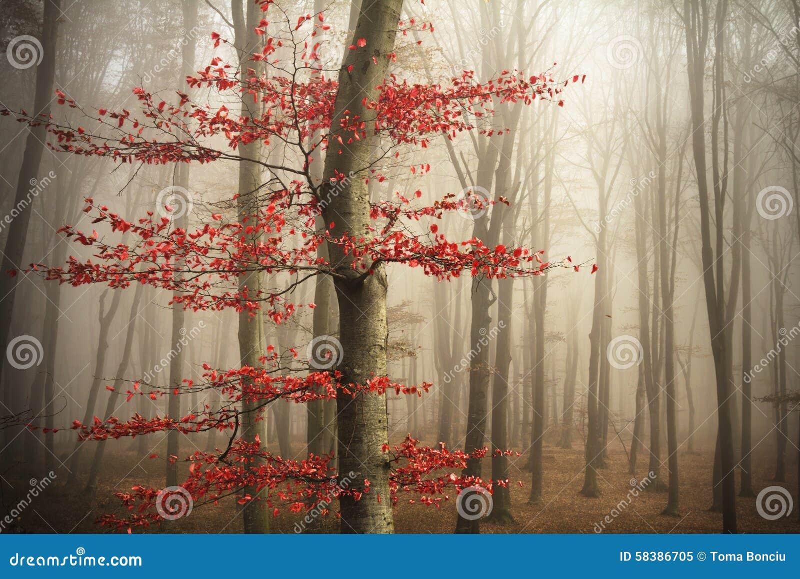 在雾的结构树