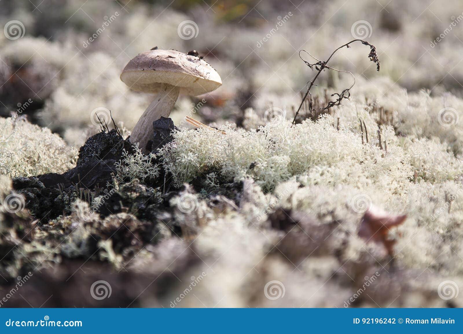 在青苔的蘑菇