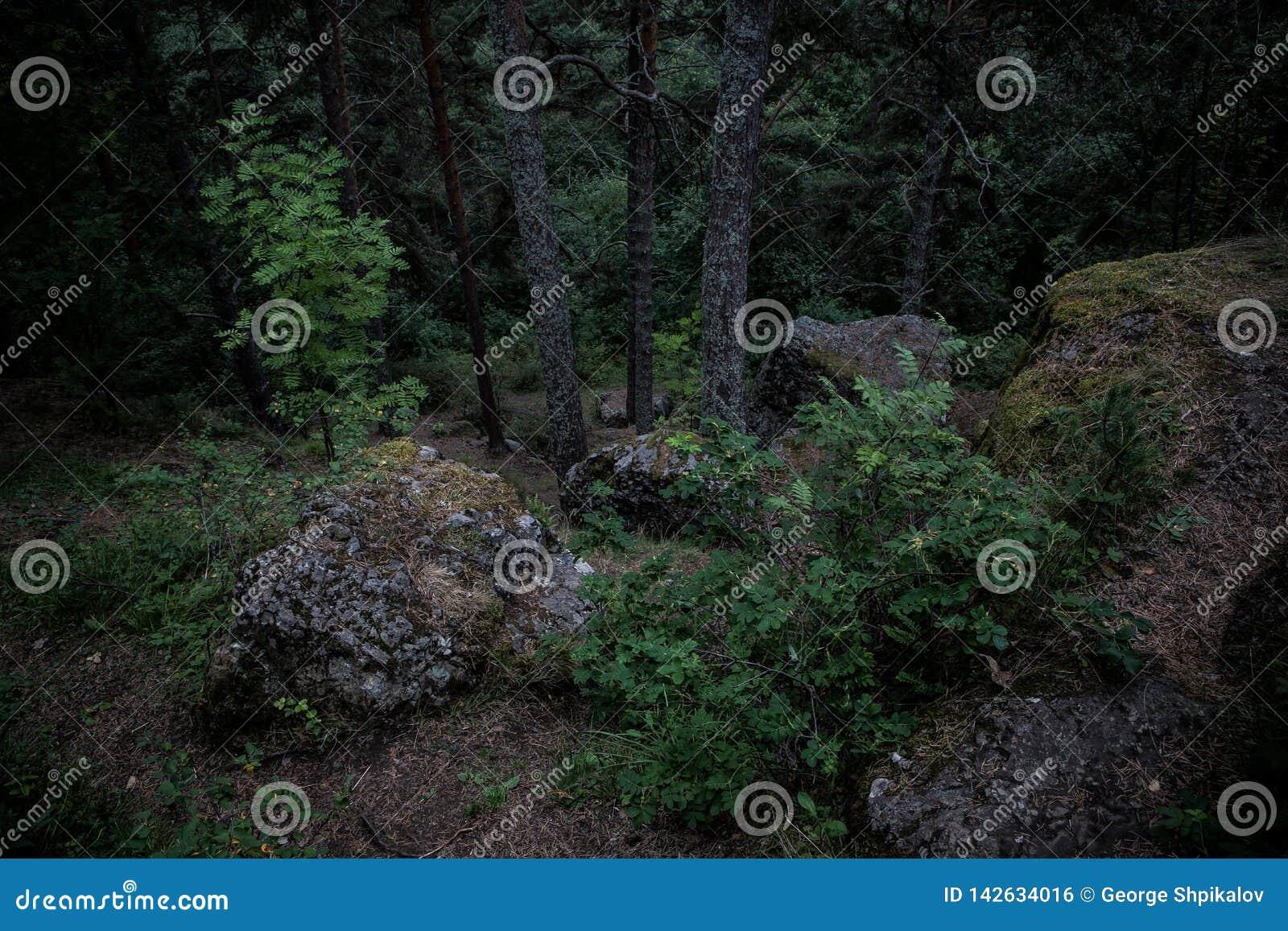 在青苔盖的黑暗的冰砾在森林反对风雨如磐的天空,绿色灌木