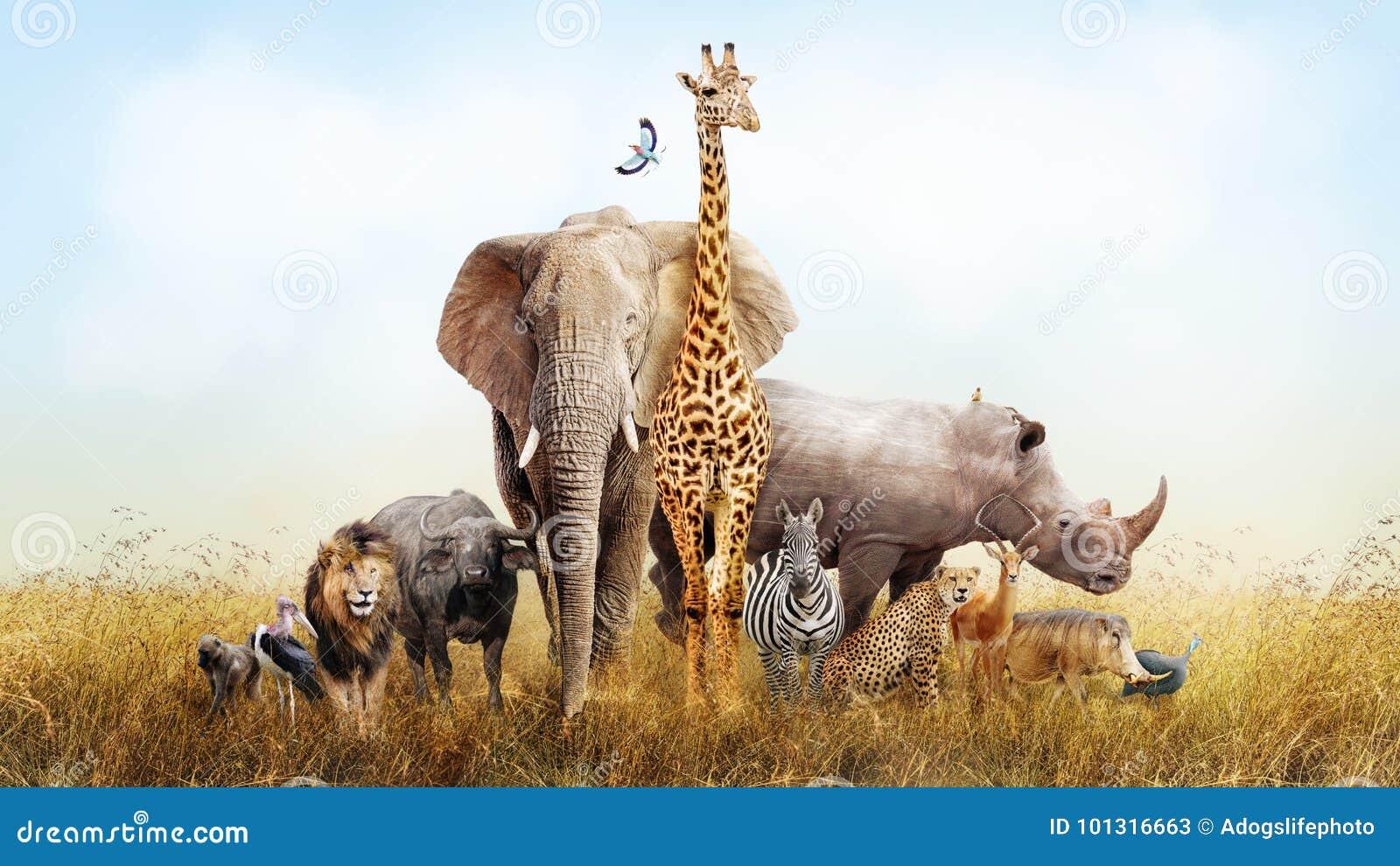 在非洲综合的徒步旅行队动物