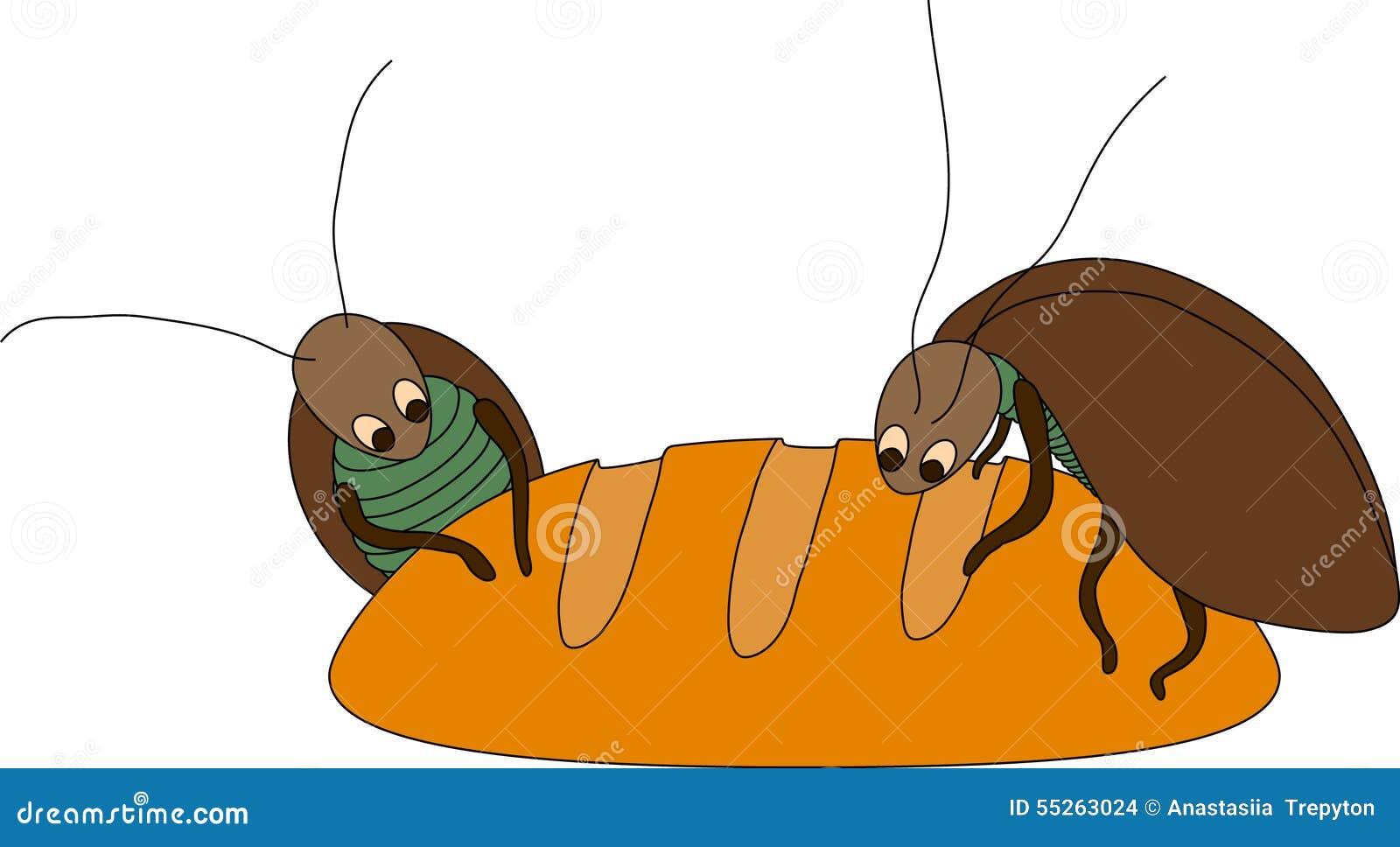 在面包的蟑螂图片