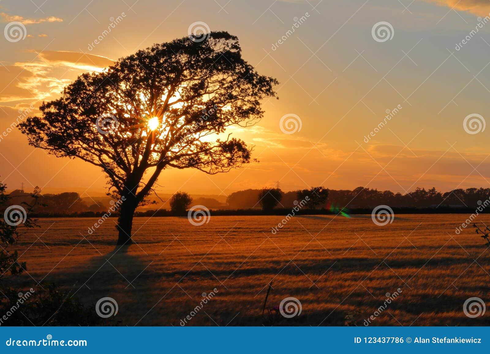 在领域和日落的一棵树