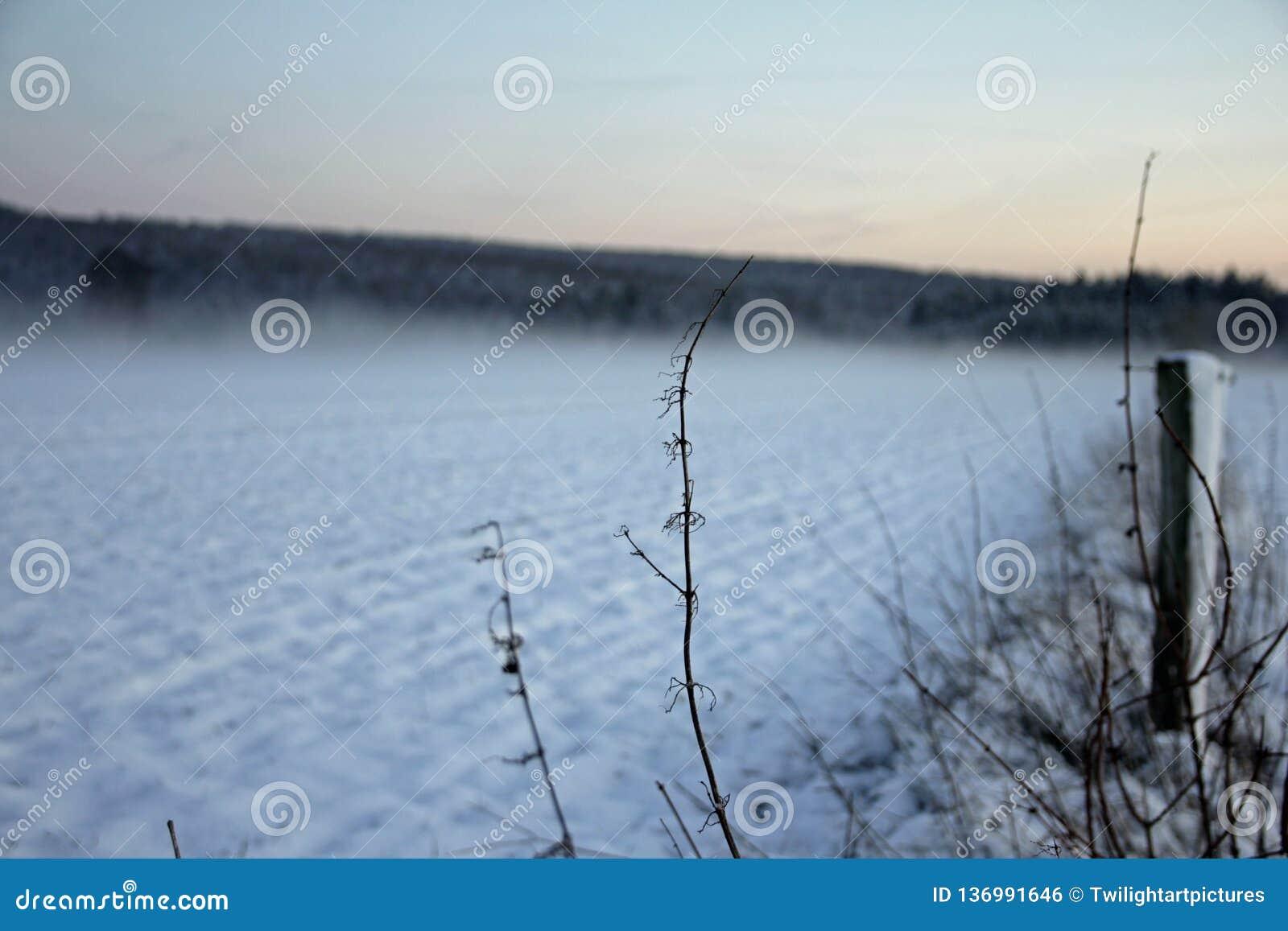 在领域的冬日