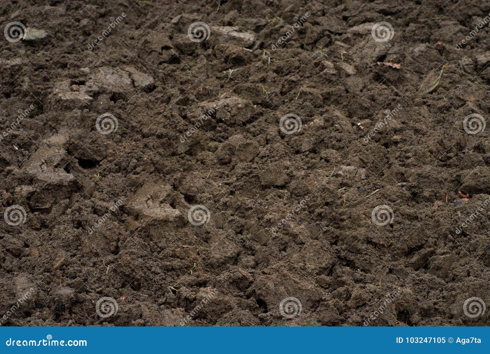 在领域的布朗土壤