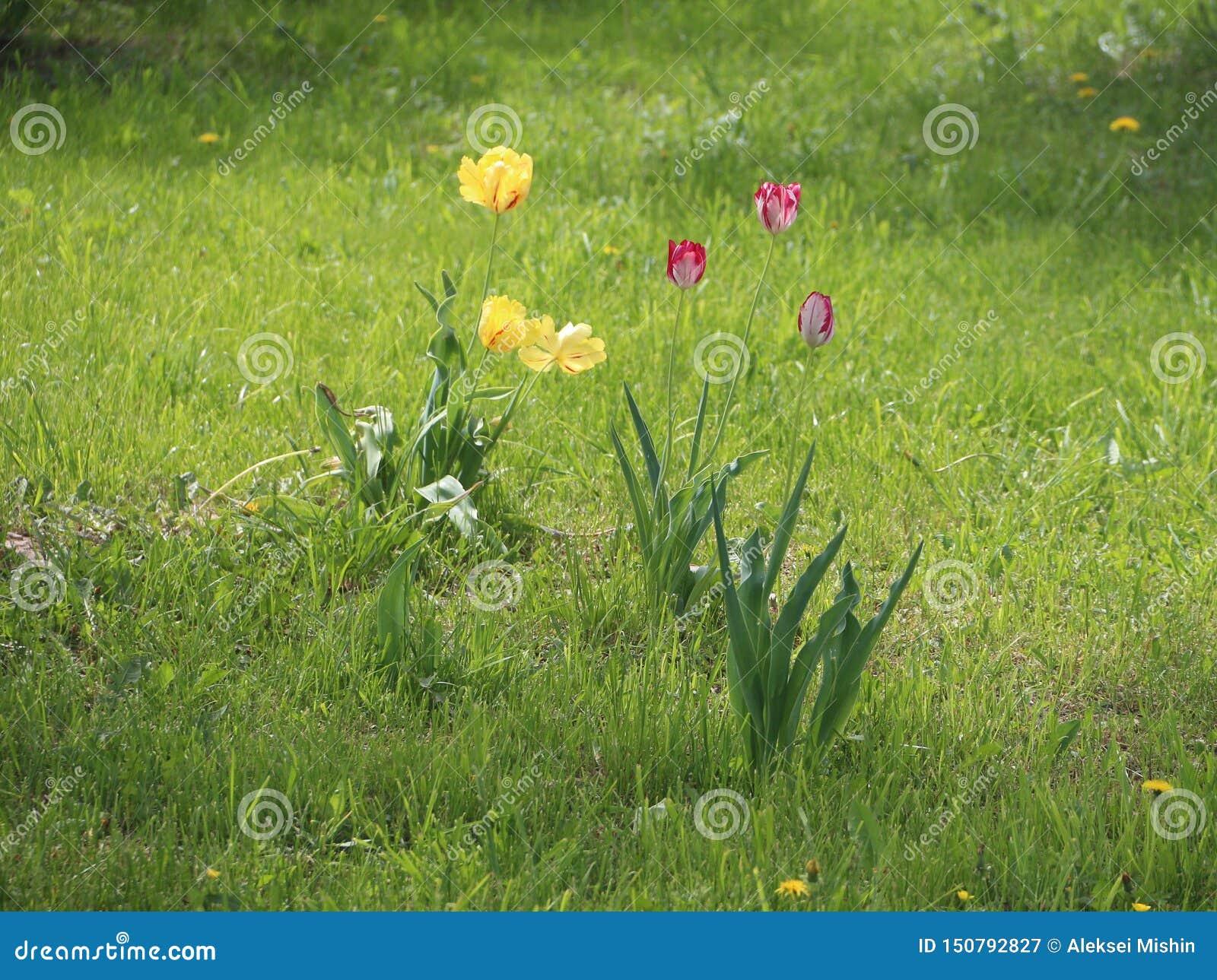 在领域的黄色和红色花