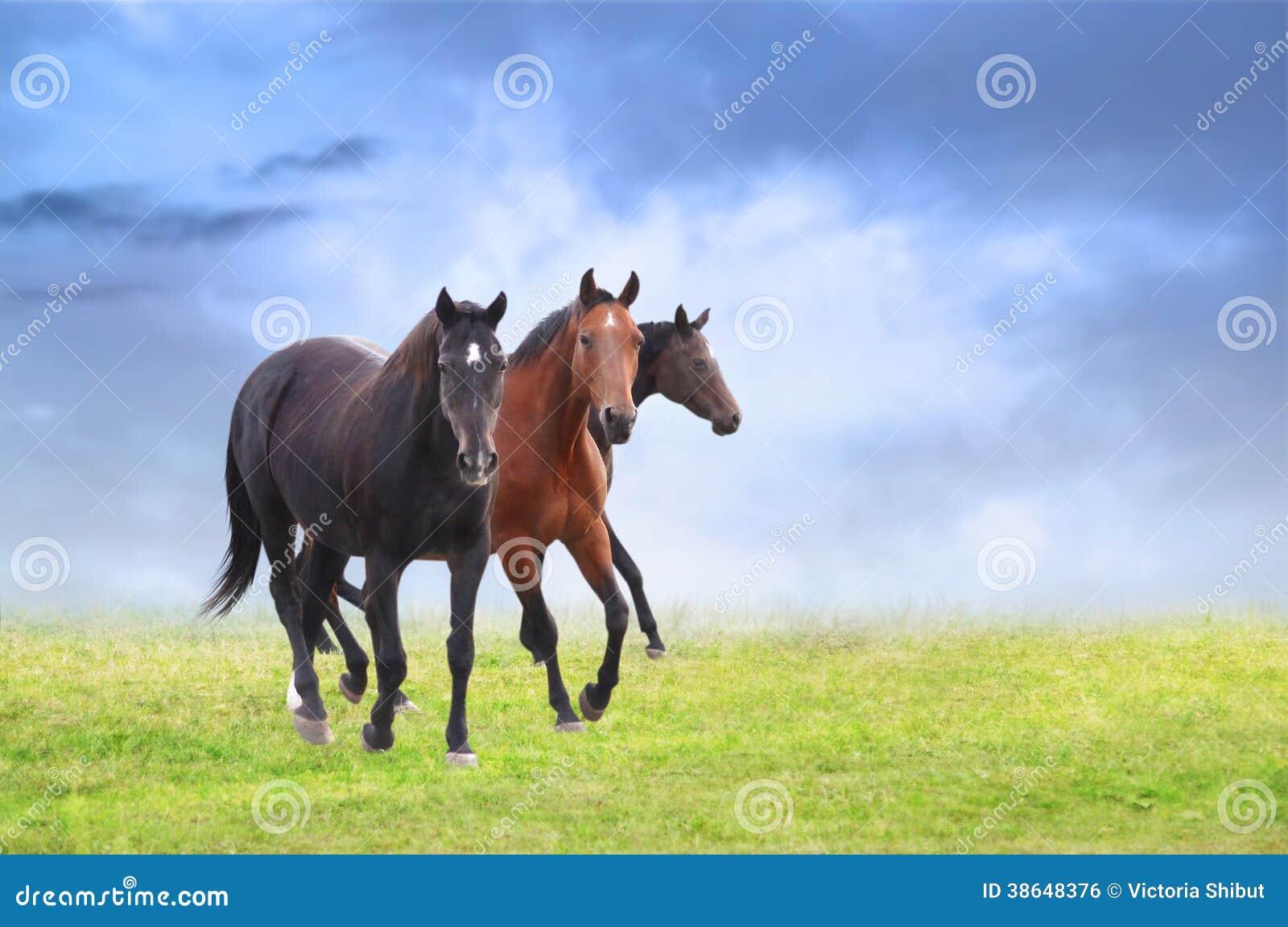 在领域,蓝天背景的热血马