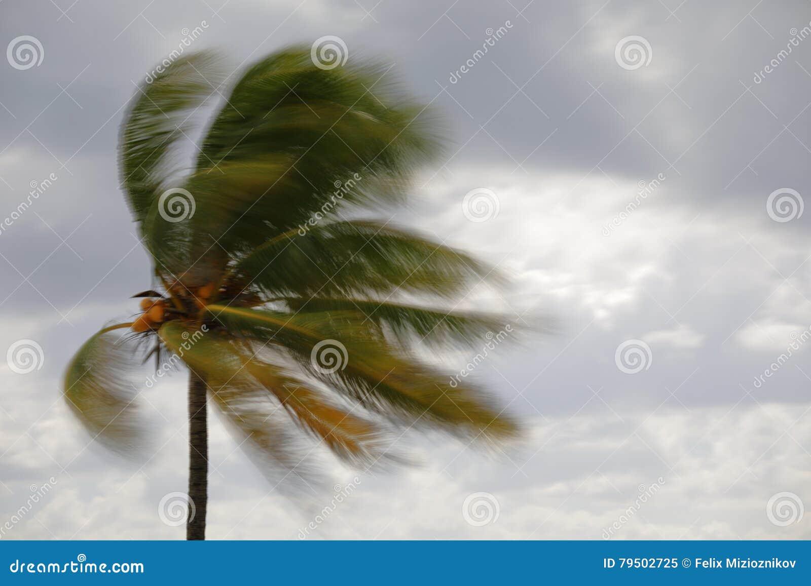 在风的模糊的棕榈树