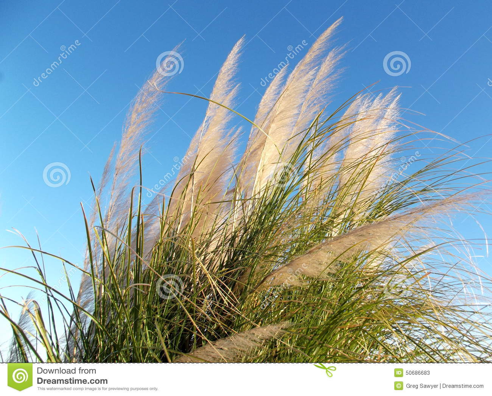 Download 在风的野草在蓝色早晨天空 库存图片. 图片 包括有 增长, 早晨, 庭院, 自由, 自然, 线路, 冬天 - 50686683