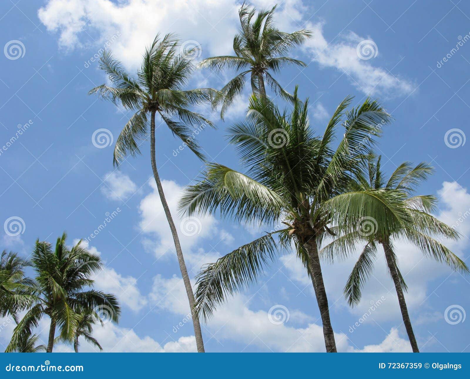 在风的高棕榈树
