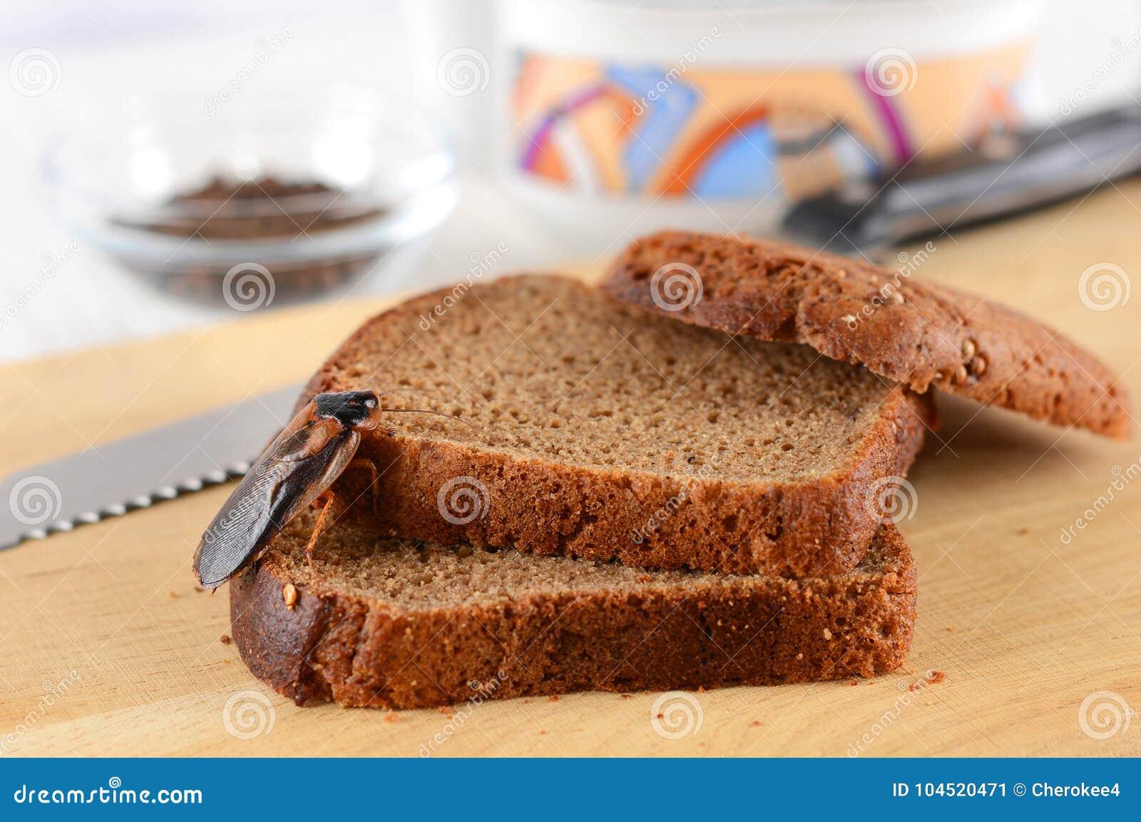 在食物的蟑螂在厨房里 由于蟑螂,问题是在房子里 吃在厨房里的蟑螂