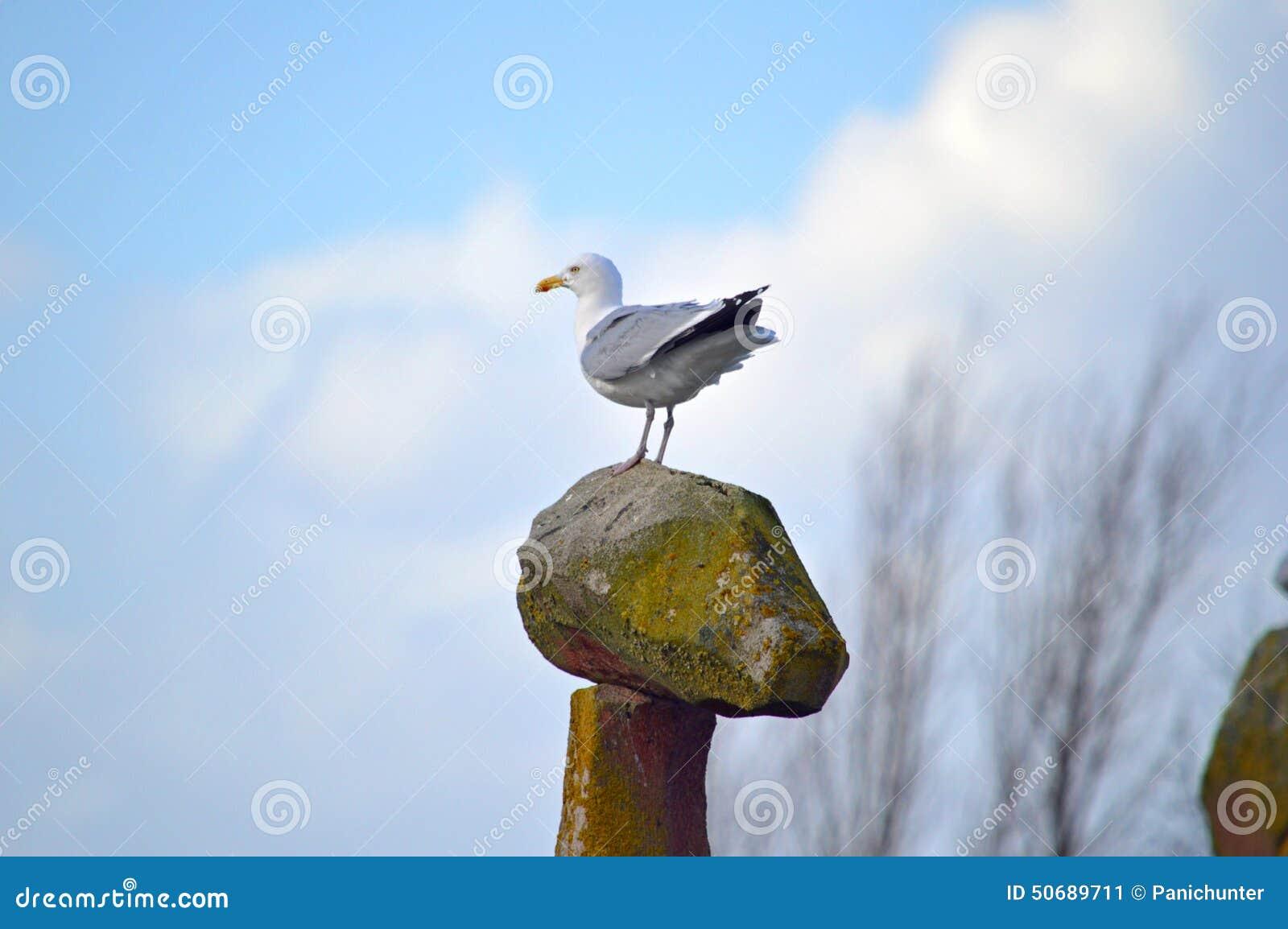 Download 在高有利位置的海鸥反对美丽的天空 库存图片. 图片 包括有 投反对票, 厚颜无耻, 端口, 云彩, 水鸟 - 50689711