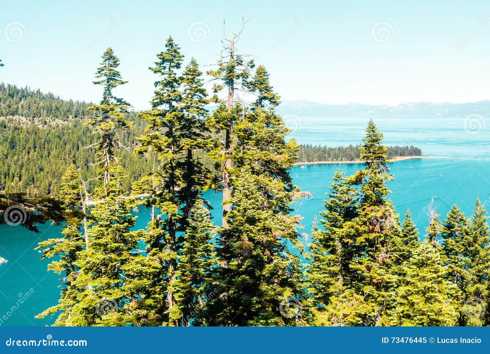 在鲜绿色海湾和太浩湖前面的树