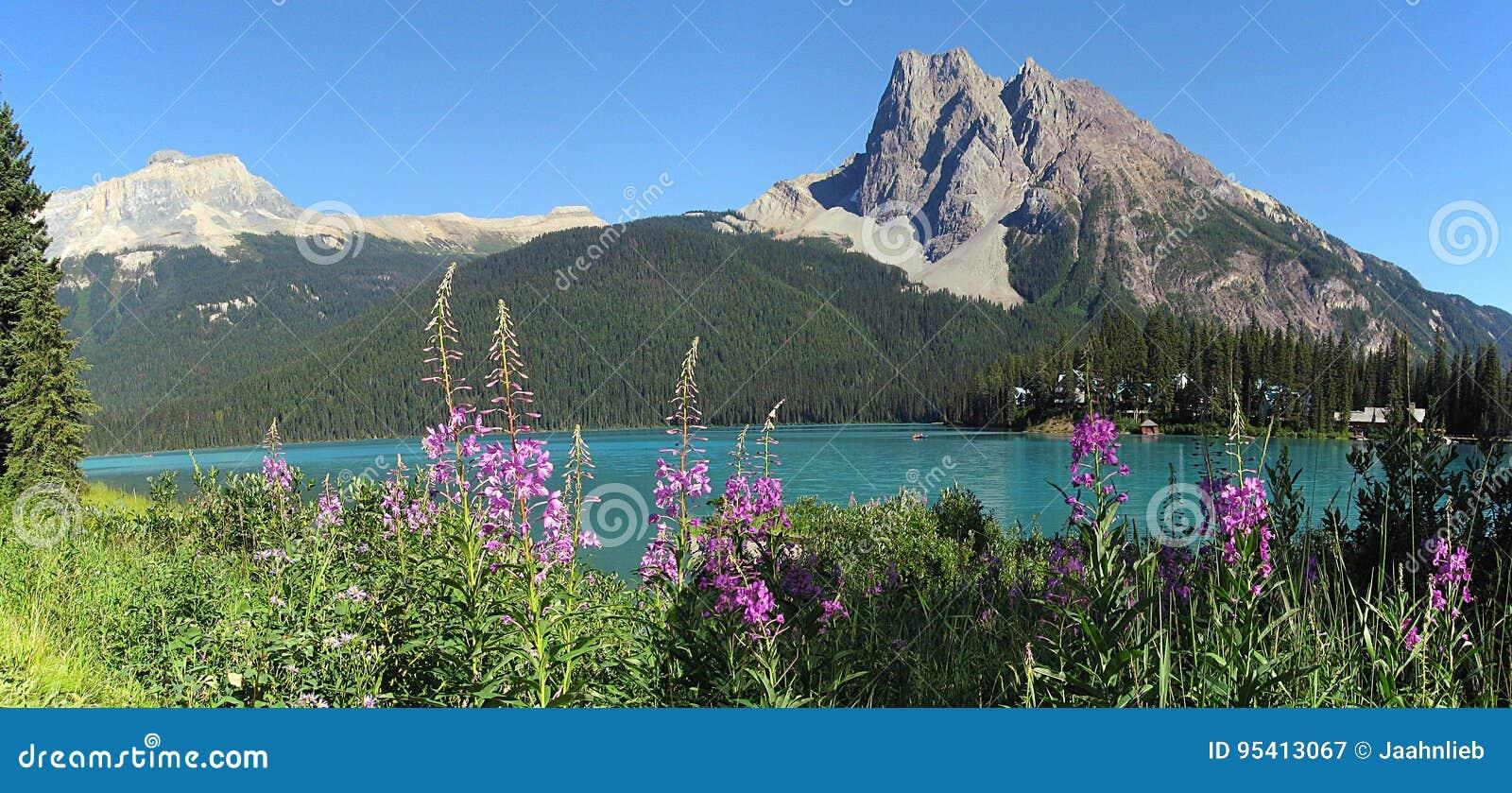 在鲜绿色湖,幽鹤国家公园,不列颠哥伦比亚省的野草