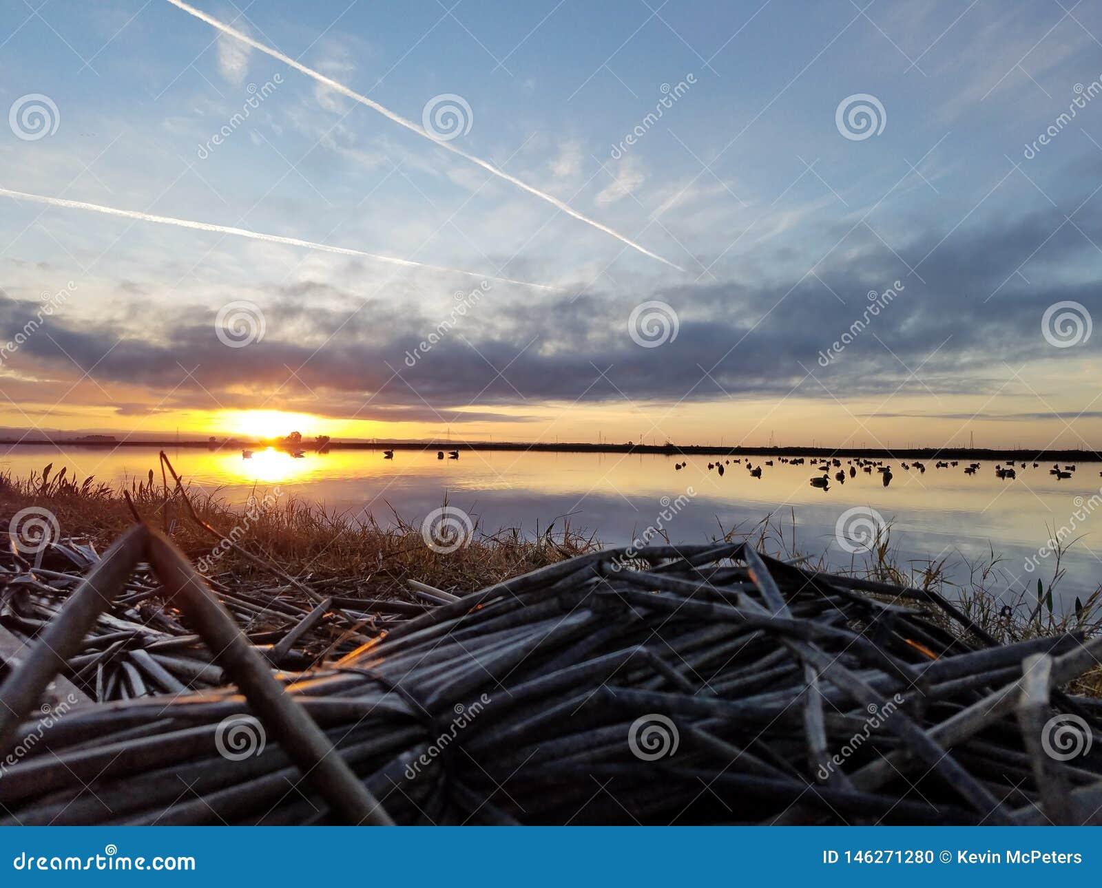在鸭子窗帘的早晨