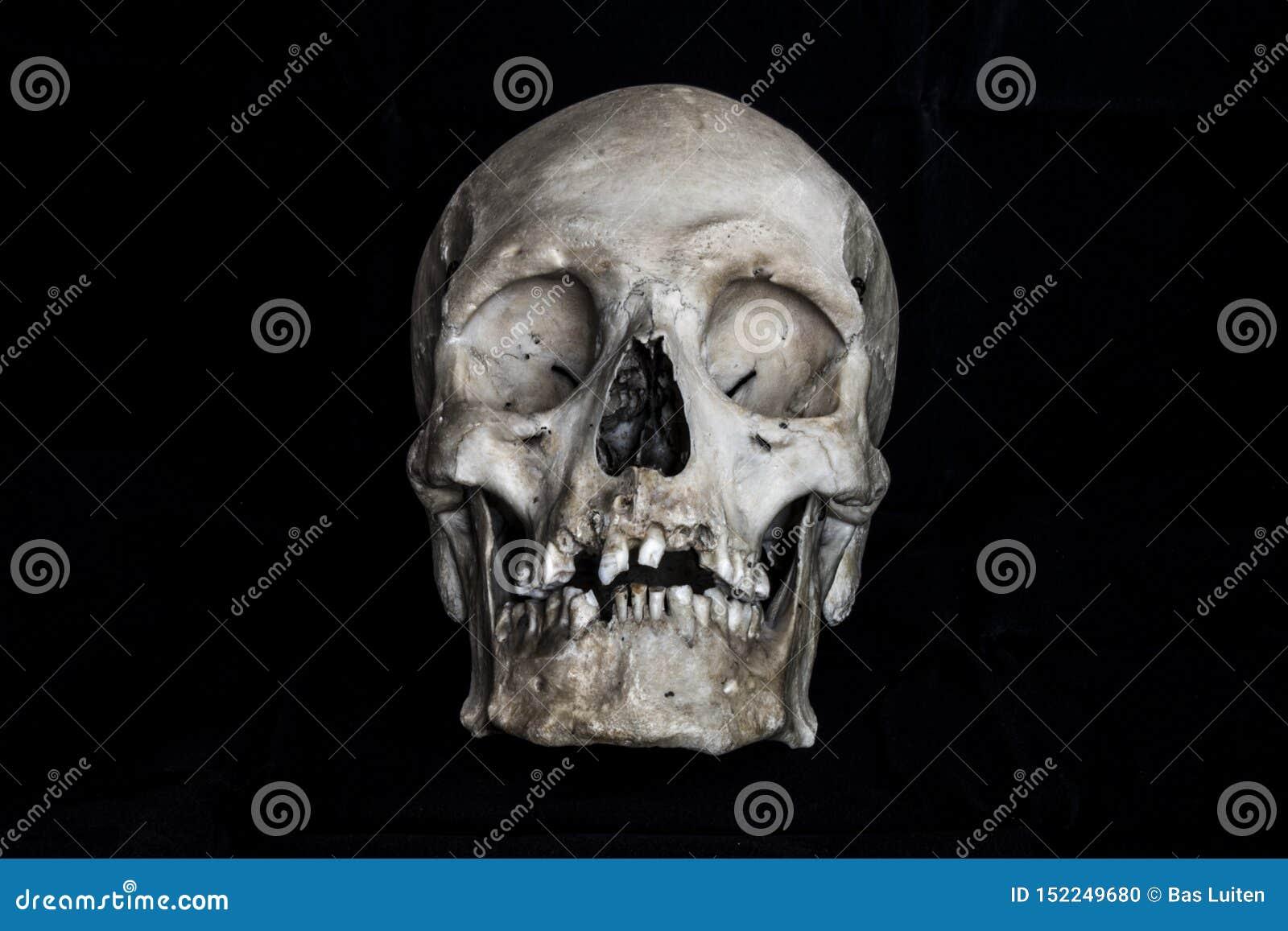 在黑背景的人的头骨