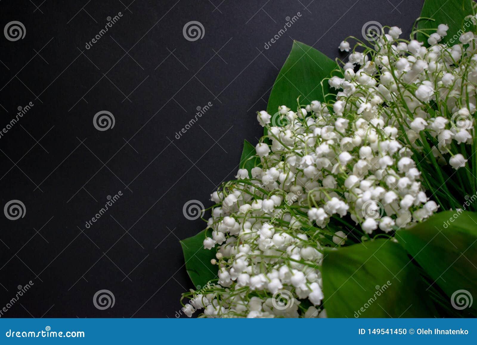 在黑背景6的铃兰花