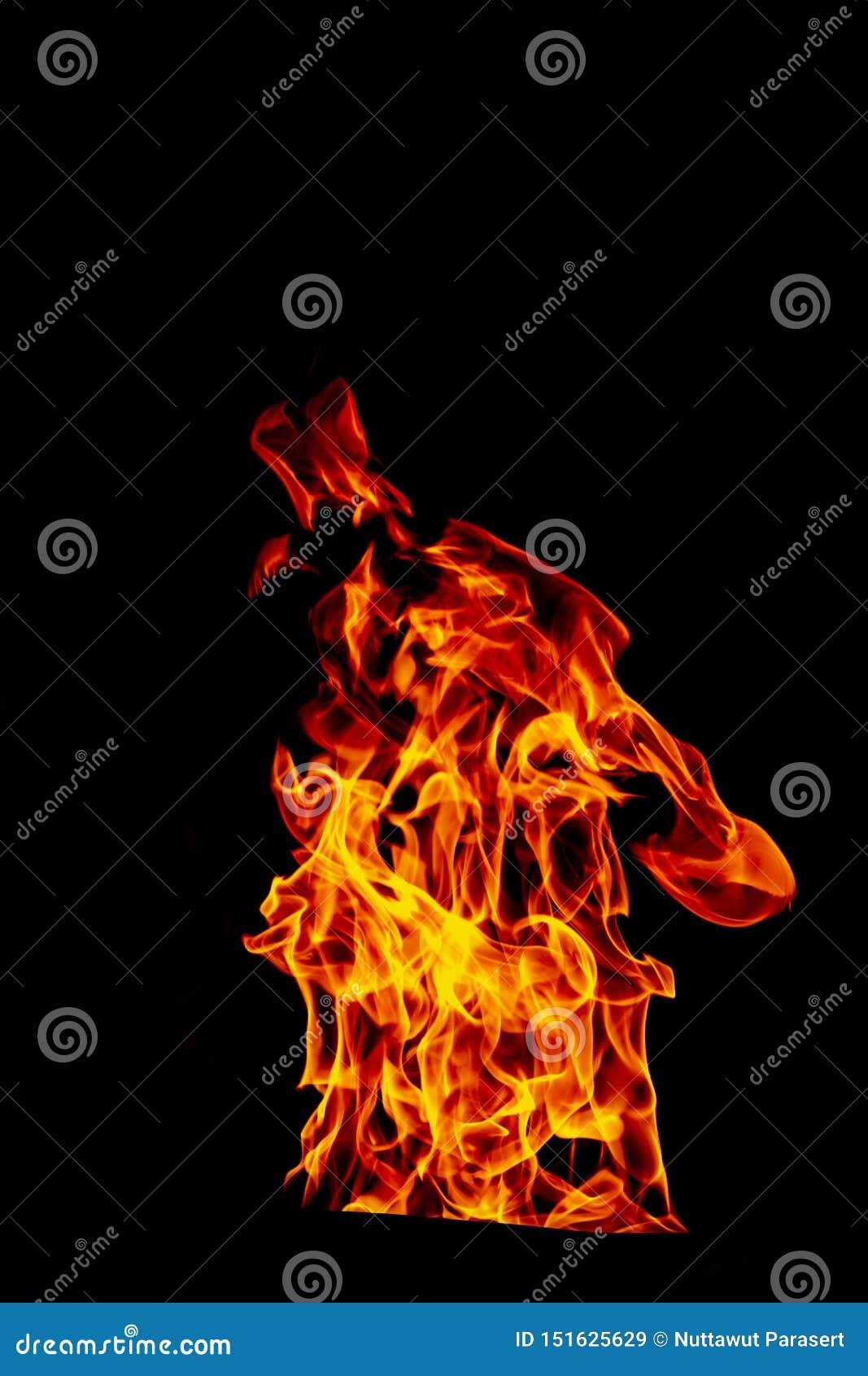 在黑被隔绝的背景隔绝的火火焰-美好的黄色,橙色和红色和红色火焰火火焰纹理样式