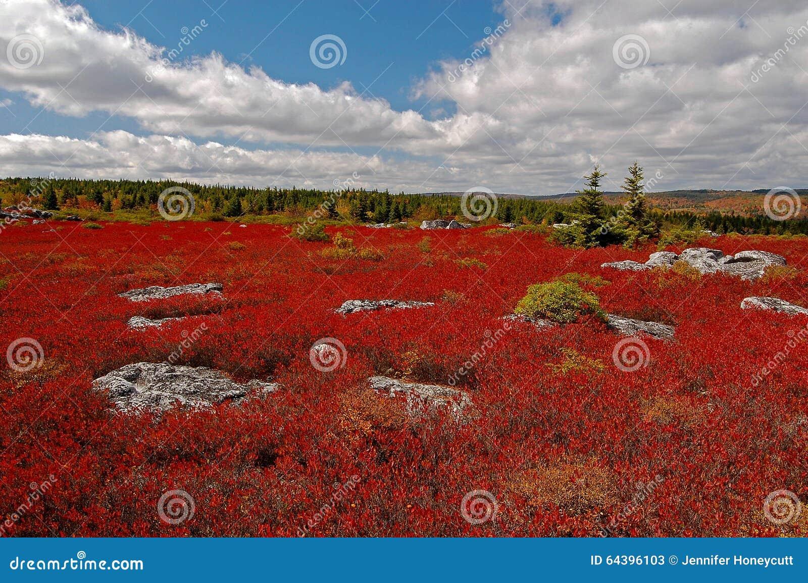 在移动式摄影车的秋天荒地铺草皮原野