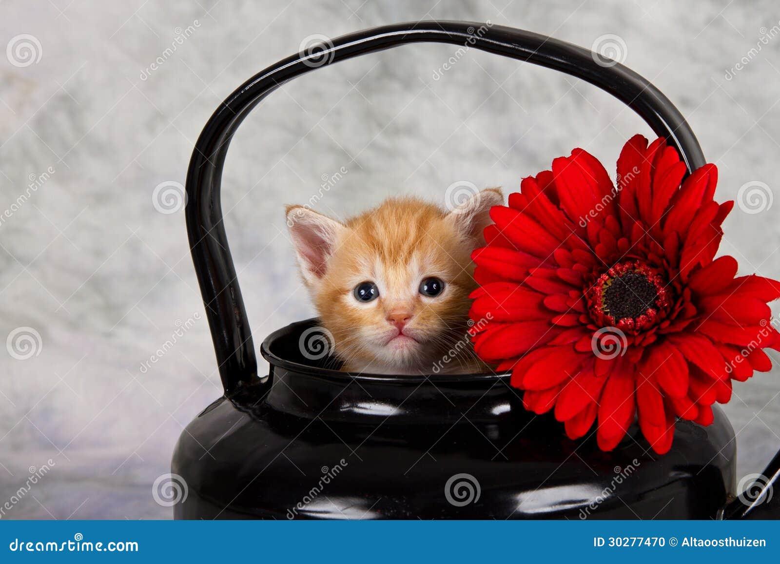 在黑水壶的小猫