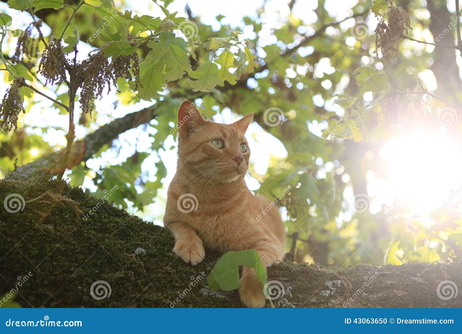在结构树的猫
