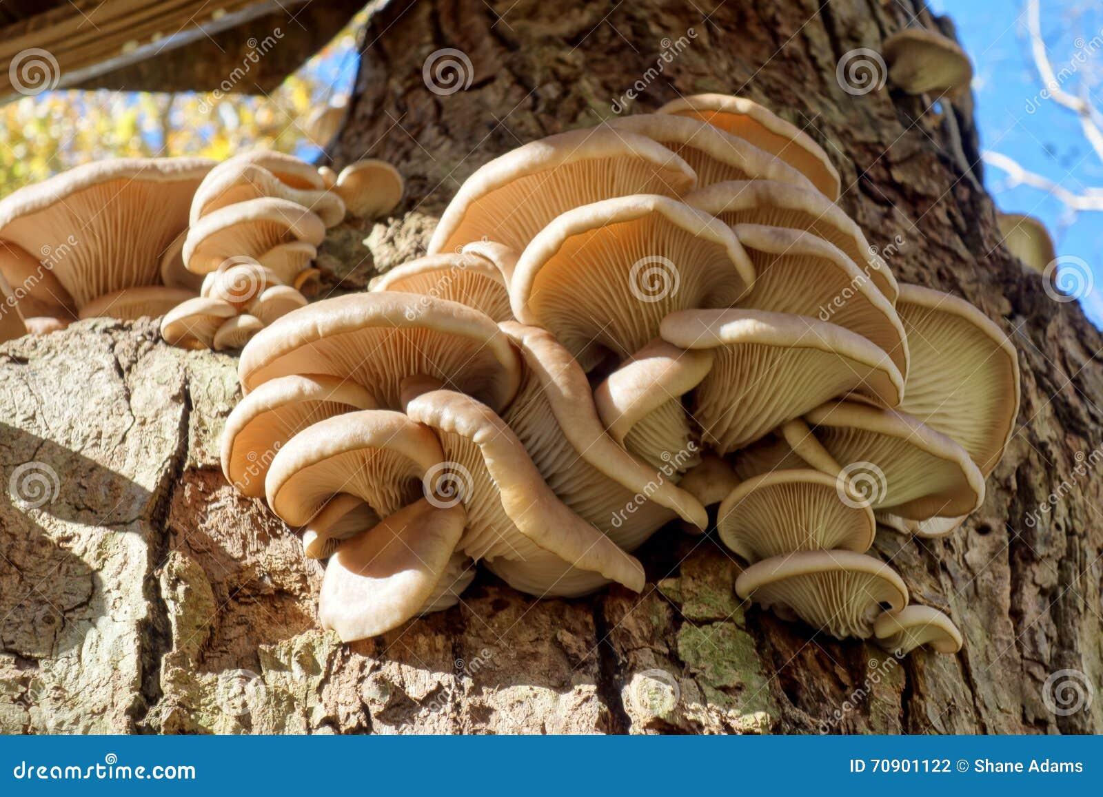 在结构树的真菌