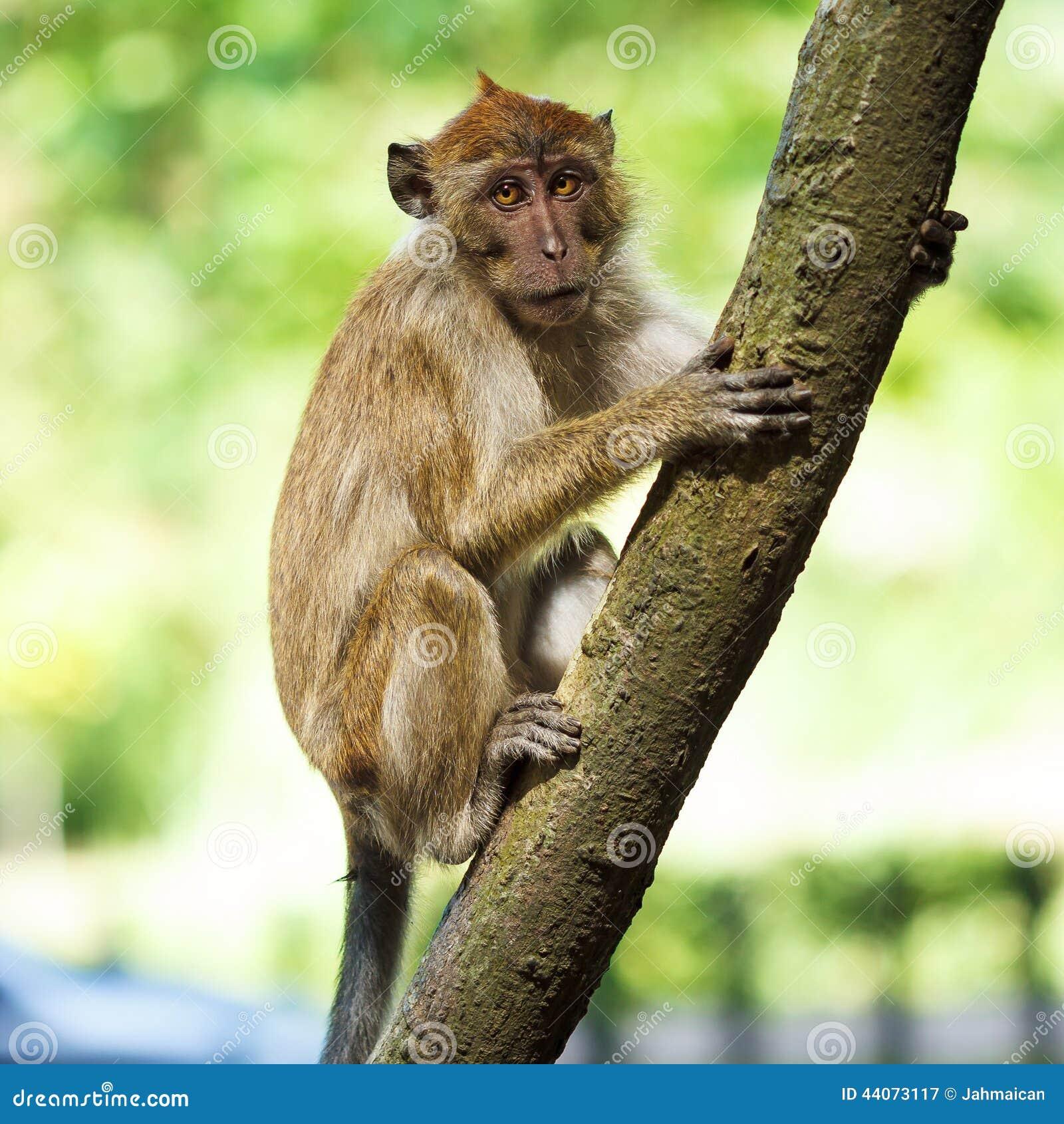 猴子是什么原因_在结构树的猴子