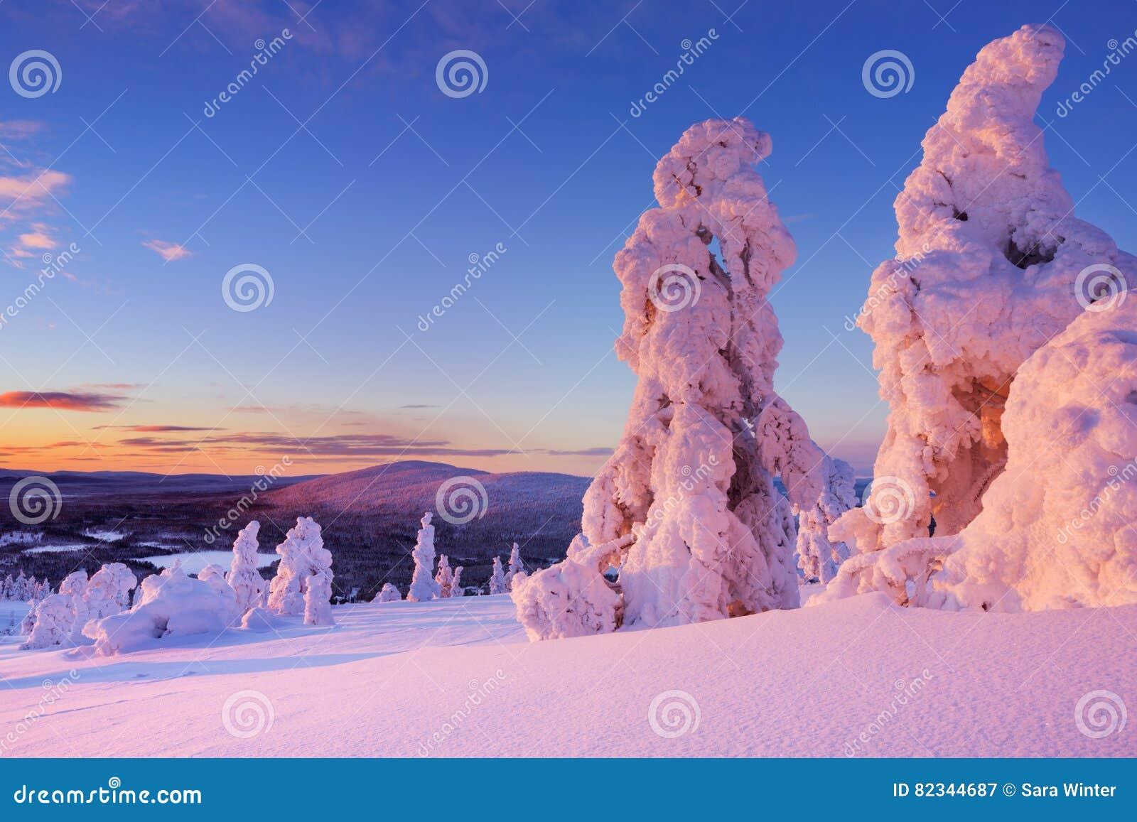 在冻树的日落在山,芬兰拉普兰