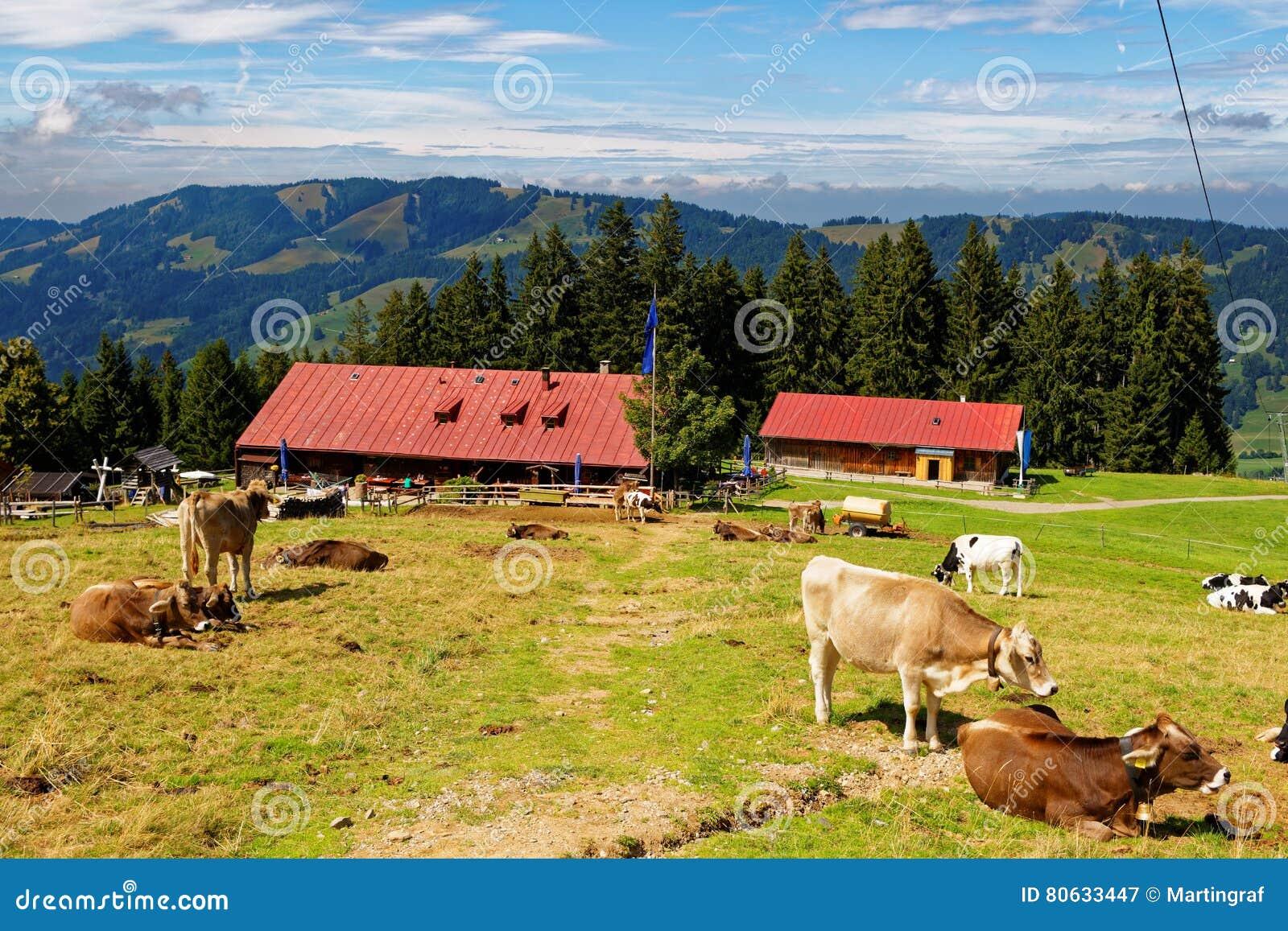 在巴法力亚阿尔卑斯的乡下生活