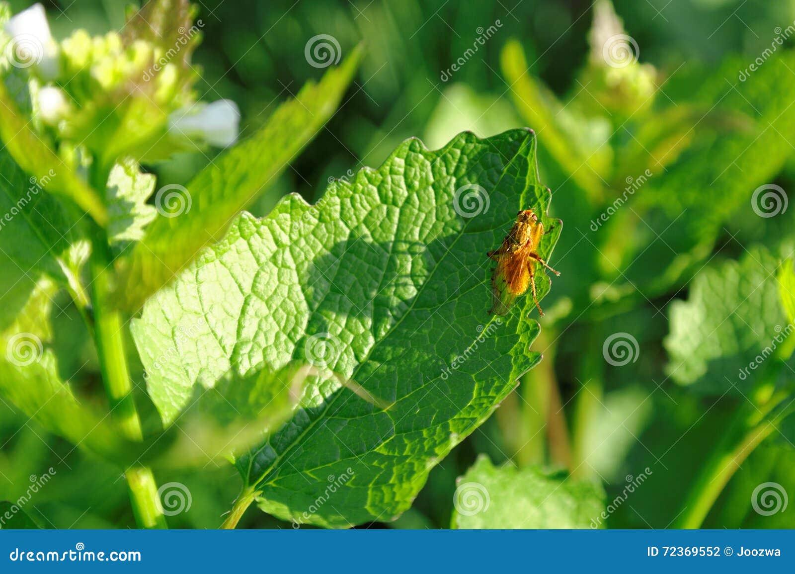在绿色叶子的橙色昆虫