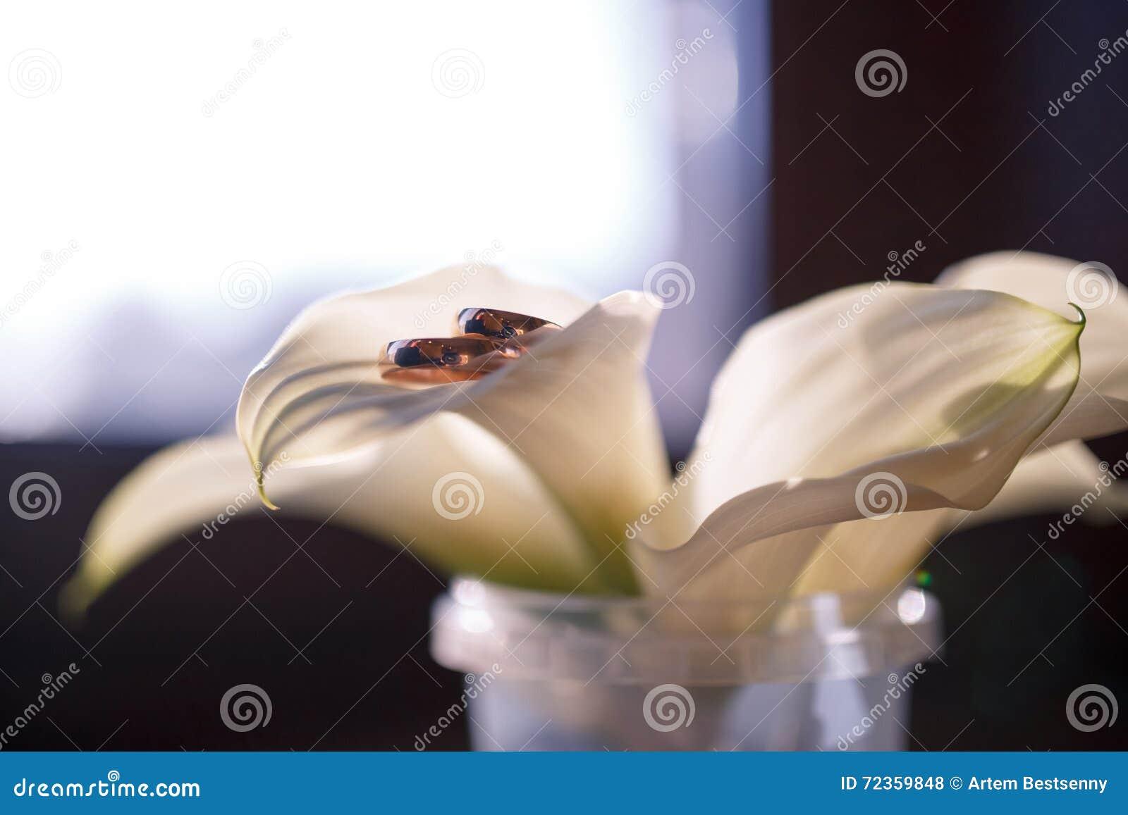 在水芋属的瓣的婚戒