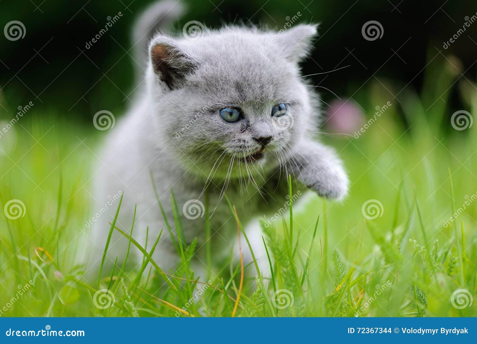 在绿草的小猫