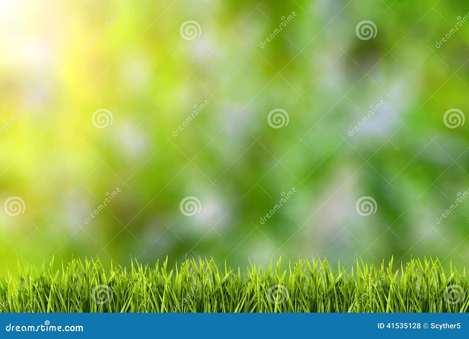 在绿草的抽象自然本底