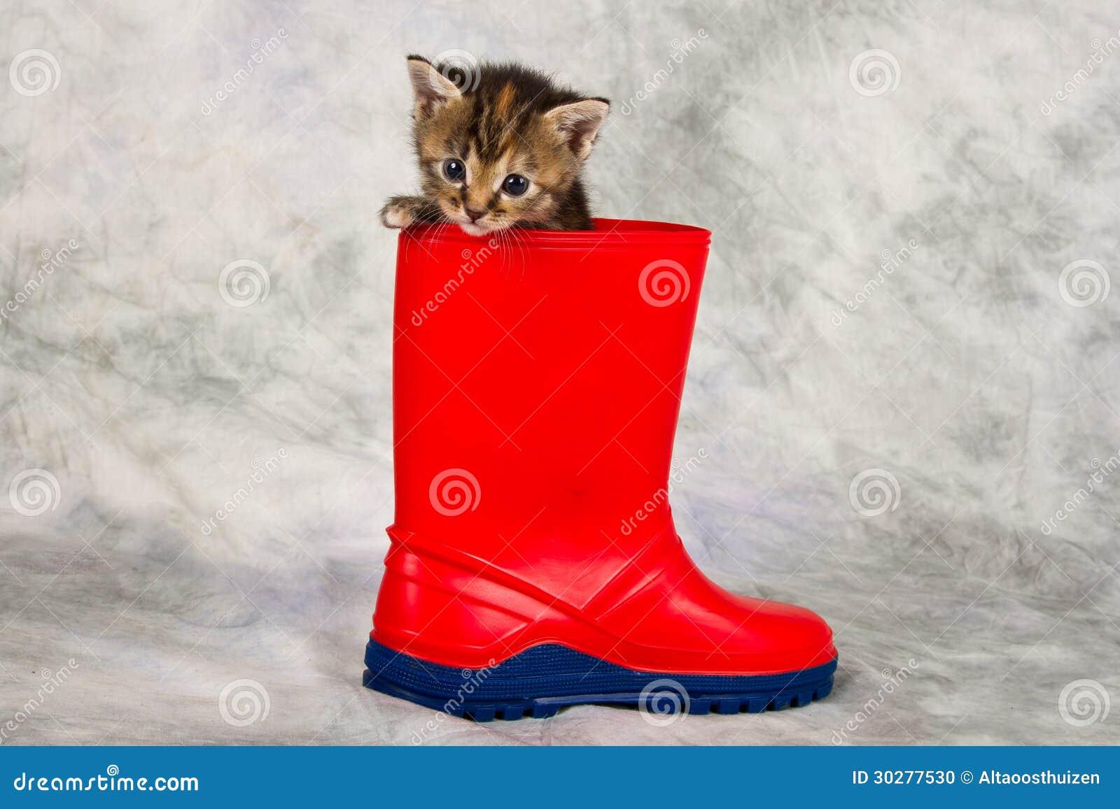 在水鞋子的小猫