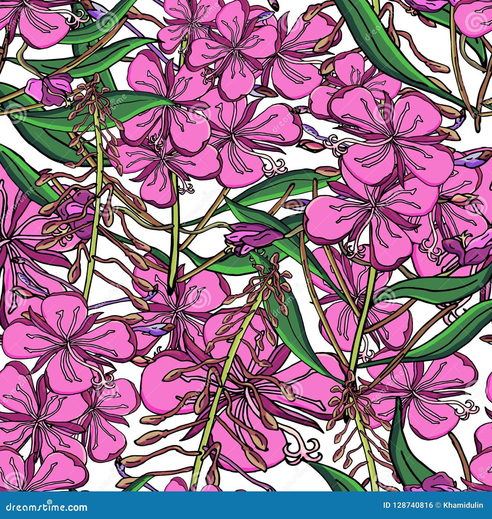 在Chamerion angustifolium野花的无缝的样式 精美花束 自由样式millefleurs 花卉