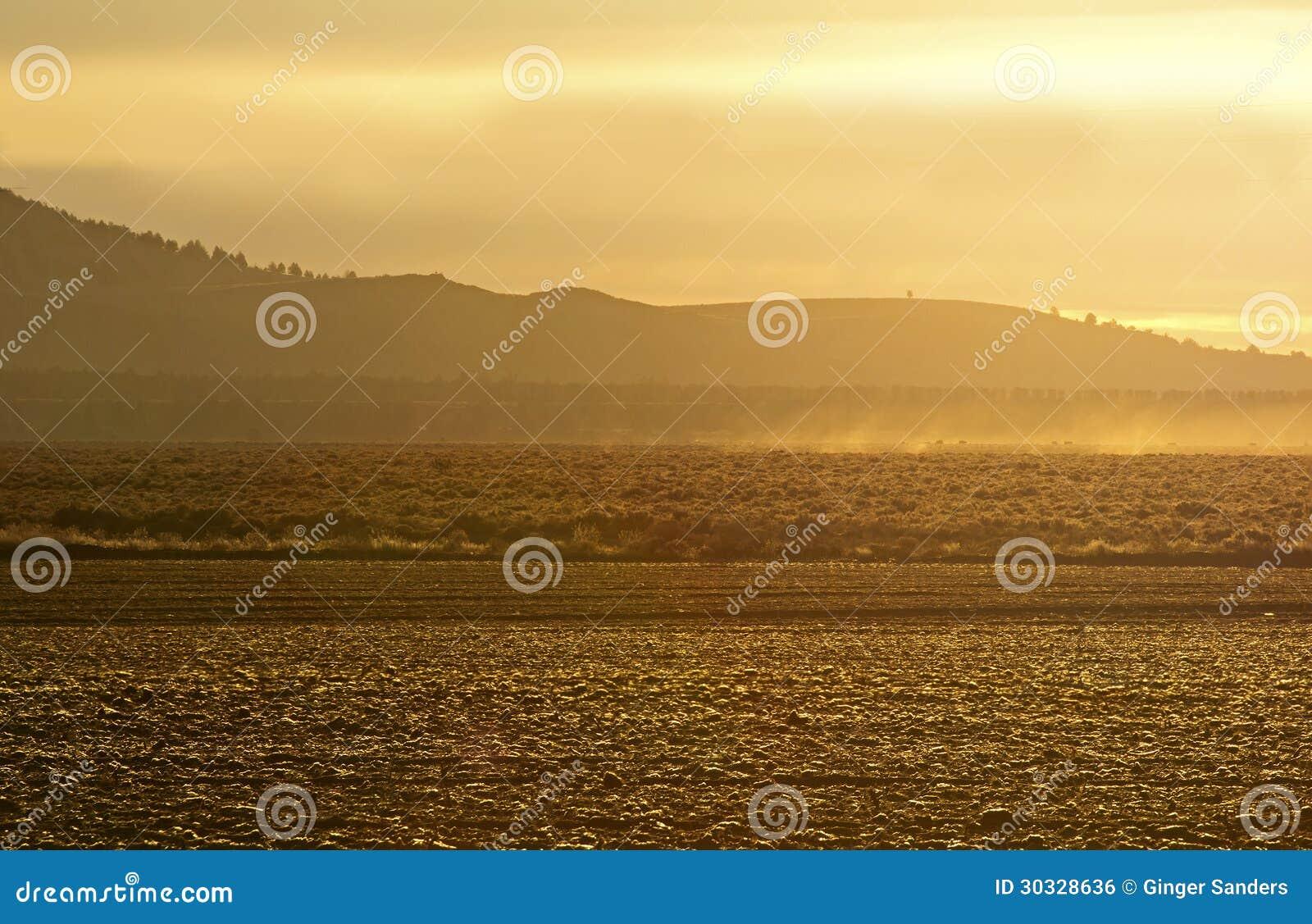 在领域的金黄日出光
