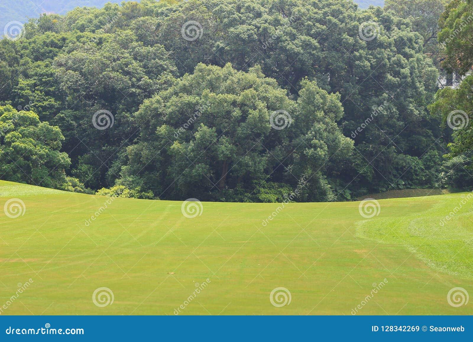 在hk的完善的草高尔夫球场领域