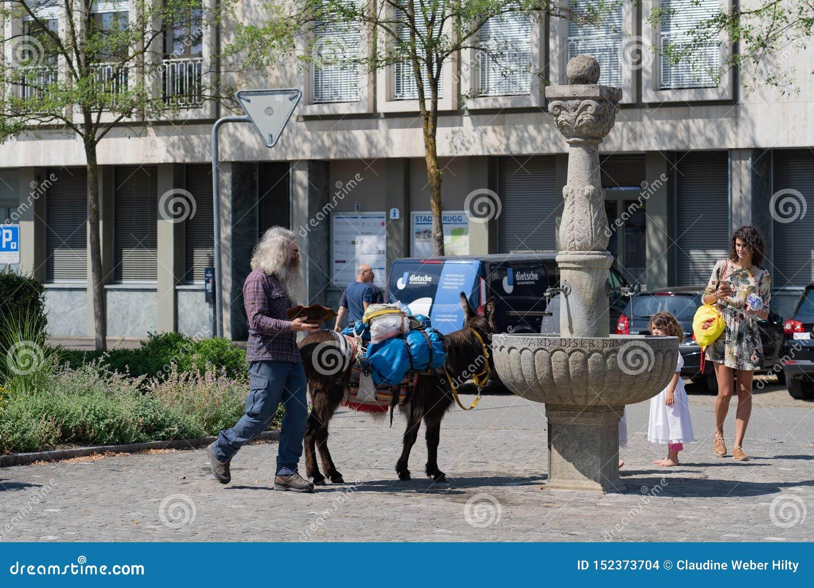 在Jugendfest布鲁格的驴饮用水