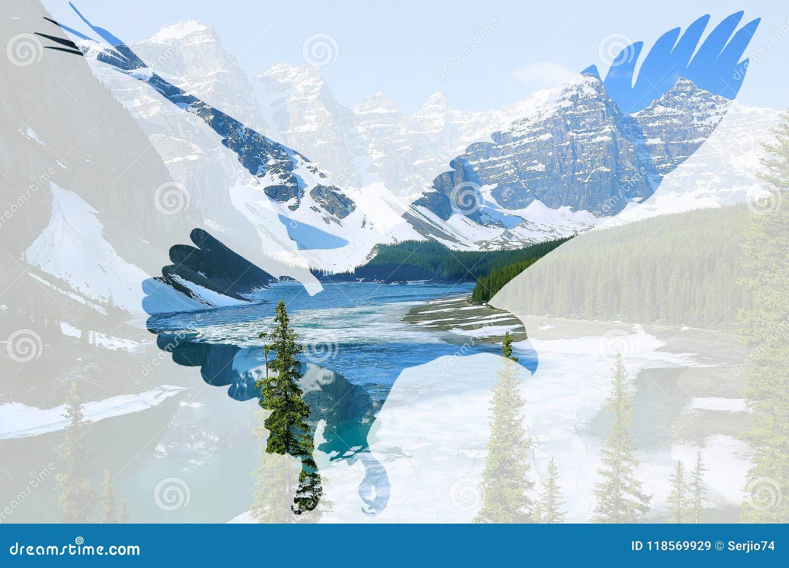 在Moraine湖背景的白头鹰