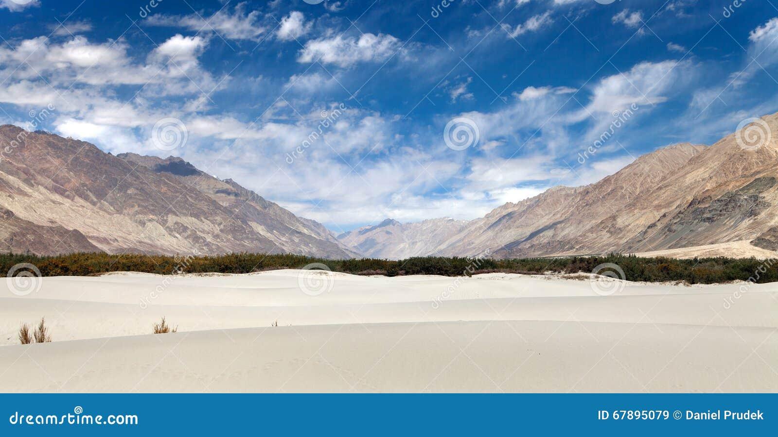 在Nubra谷-拉达克-查谟和克什米尔的沙丘