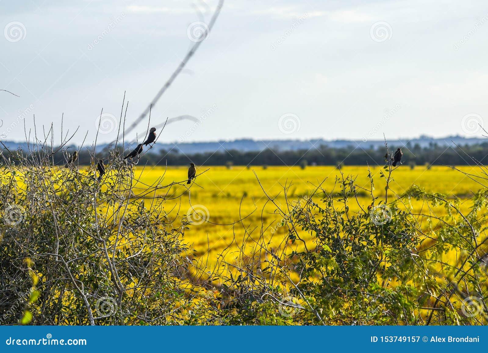 在paisage的孤立鸟