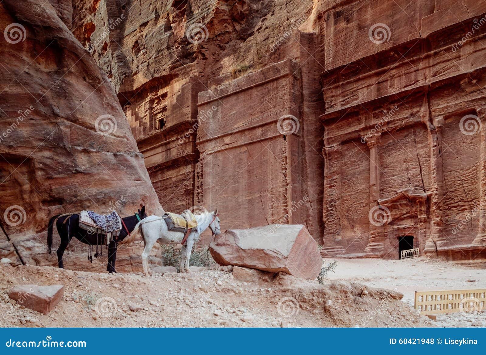 在Petra的马